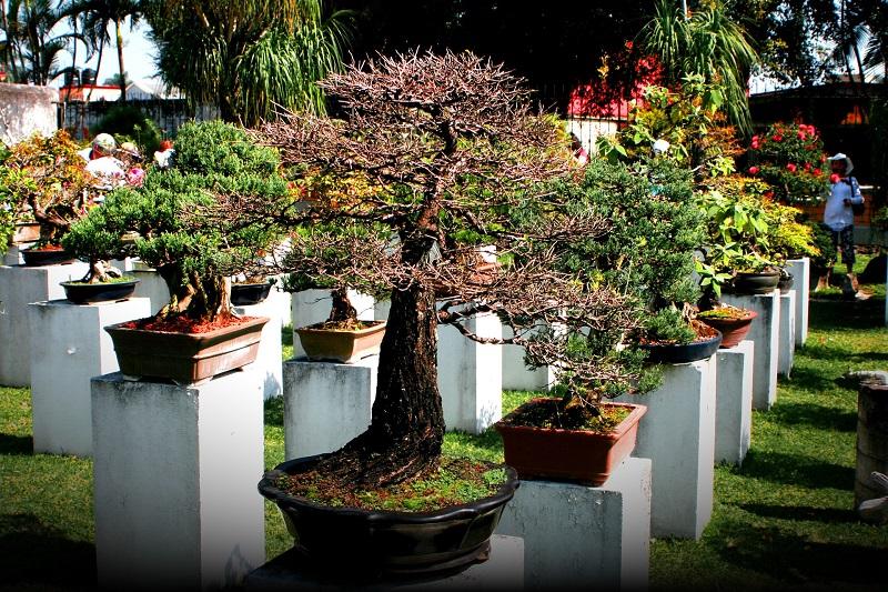 Tree Bonsai Squash Blossom Flowers Garden