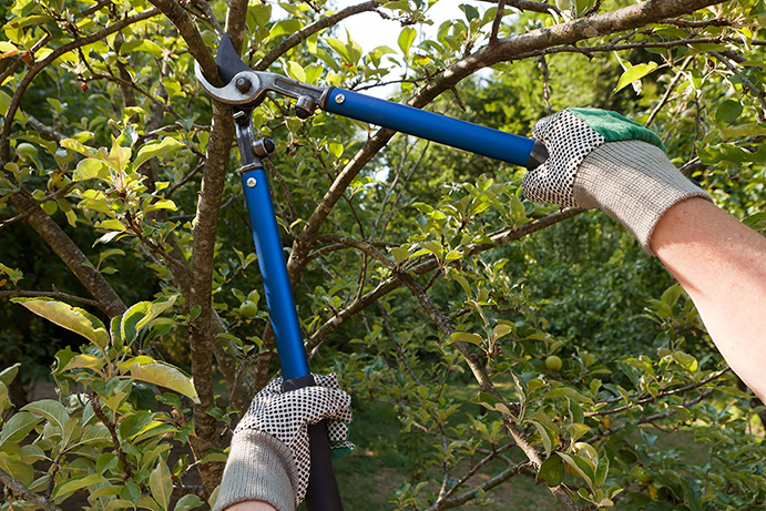Types and benefits of fruit tree pruning services in Sydney