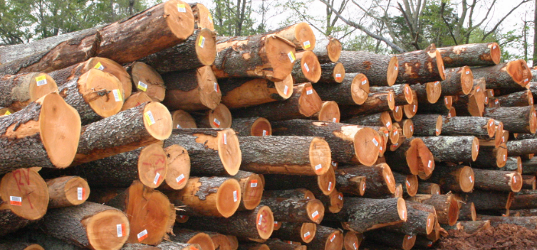 The Firewood That Wins Online Customers With Quality