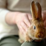 Rabbits As House Pets