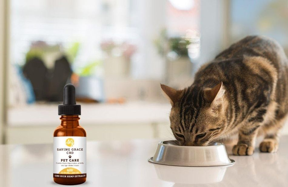 How to Use Cannabidiol Oil for Cats
