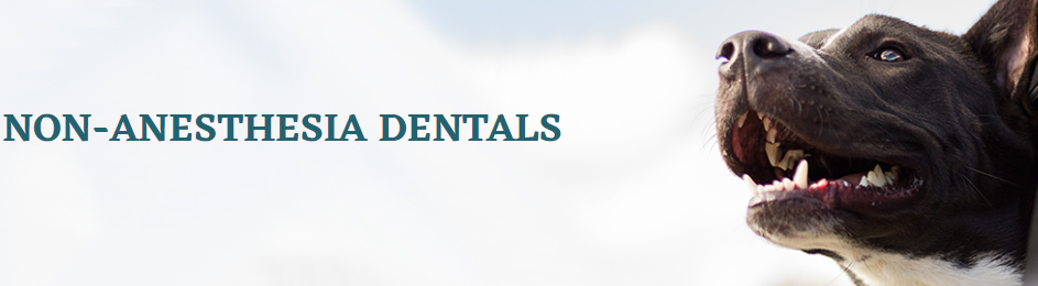 Why Should Pet Dental Services Be a Part of Life